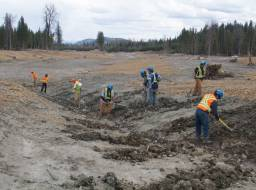 Hazeltine Creek preparatory work for planting. Planting crew from Xatsull FN (Soda Creek Indian Band)--Apr 2015
