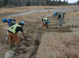 Willow wattle planting in lower Hazeltine Creek. Planting crew from Xatsull FN (Soda Creek Indian Band)--Apr 2015