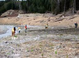 Xatsull FN (Soda Creek Indian Band) planting crew at work in lower Hazeltine Creek--May 2015