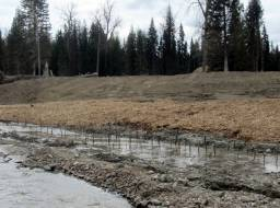 Newly planted willow stakes in lower Hazeltine Creek. The willow stakes were harvested locally around the mine site during the previous Winter--May 2015